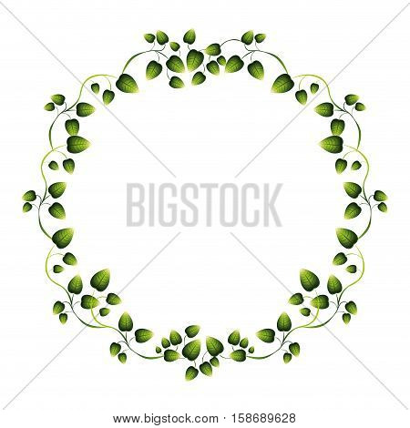 border green leaves with creepers vector illustration