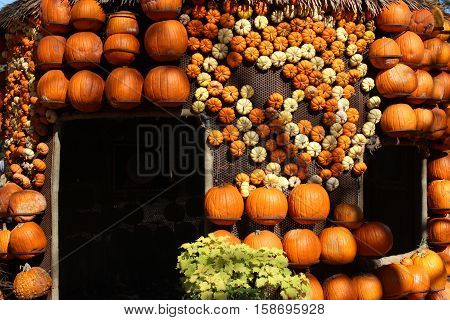 House covered in pumpkins and gourds.  Festive fall background.