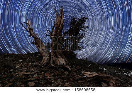 Illuminous Light Painted Landscape of  Stars in Bristlecone Pines