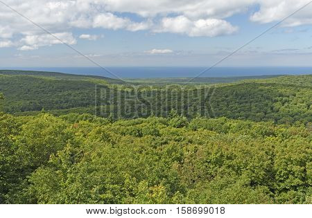 Forest Panorama in Summer in the Porcupine Mountains of Michigan