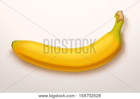 illustration of realistic single banana on bright  background with shadow