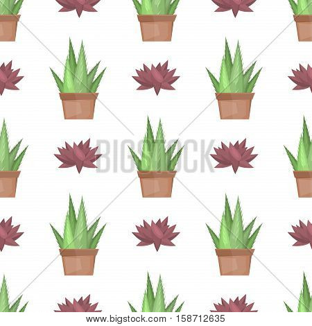 Cactus desert plant blossom flora succulent cartoon cacti. Prickly cactus plant thorny spiny. Desert mexican tropical cactus summer garden plant. Seamless pattern vector cactus green flower desert.