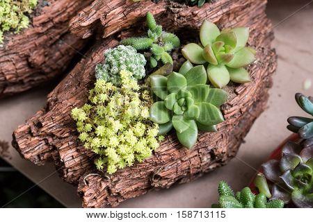 Rectangular arrangement of succulents; cactus succulents in a planter