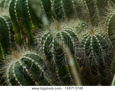 spiky catus in the group can be found in GBTB