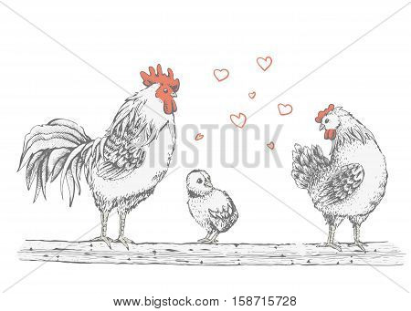Illustration - sketch rooster, chick and broody. Series of farm animals. Graphics, handmade drawing cock, chicken and hen. Vintage engraving style. Isolated chicken birds are sitting on a tree branch