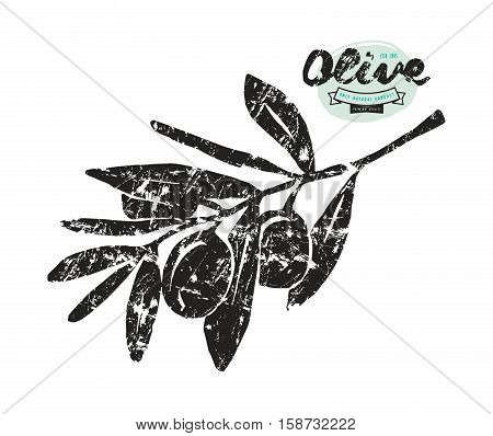 Stock vector illustration of olive branch. Hand drawing style with shabby texture. Print on white background