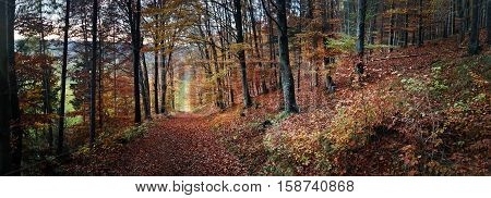 A panoramic view of tranquility in the Fall in the forest, November 2016