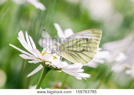 white butterfly on white flower in summer