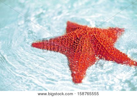 Beautiful colorful bright red starfish in clean ocean blue water