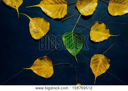 A green leaf surrounded by many old and yellow leaves. An idea for 'unique' or 'young and old'.