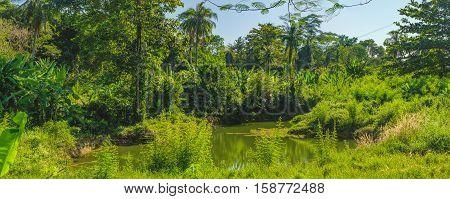 Panorama view of palm trees and dense tropical vegetation growing along the small river, Mu Koh Chang National Park, Chang island Thailand