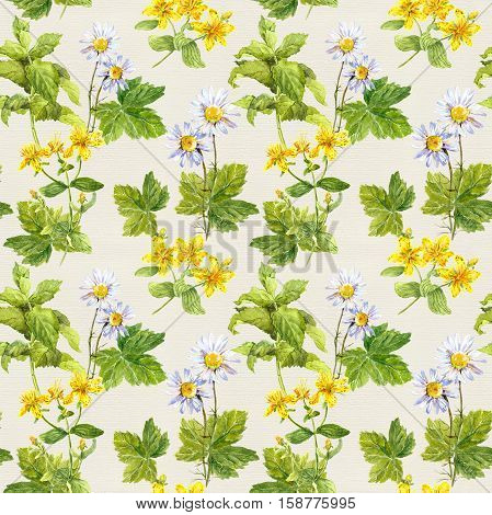 Herbs and flowers: camomile, hypericum, mint. Herbal seamless print Floral watercolor