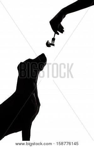 dog silhouette on white background stares at food dark contour of a puppy sitting and