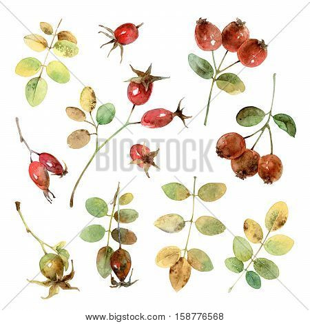 Set of beautiful autumn branches and berries briar. Watercolor illustration