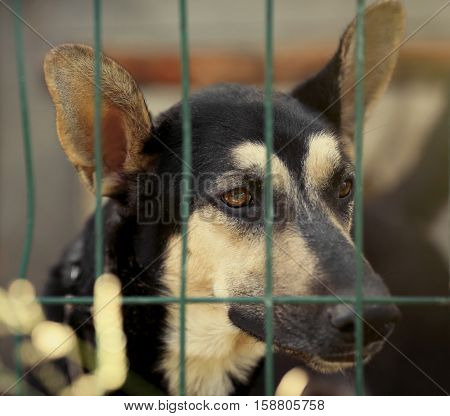 Portrait of homeless dog in animal shelter cage