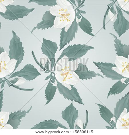 Seamless texture twig jasmine twig flower and buds spring flower vector illustration