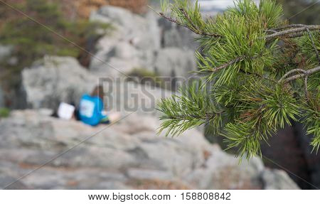 Pine tree bough in focus with people in blur background on mountain top, enjoying reading outdoors