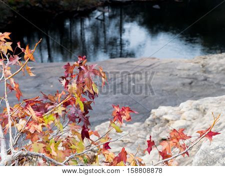 Leaves changing colors in autumn near lake