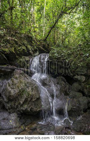 Waterfall track forest atlantic Eldorado Park moss wet