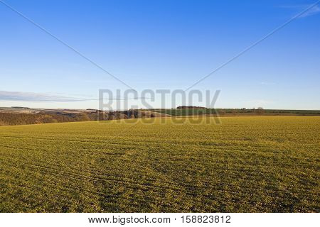 Autumn Landscape With Wheat