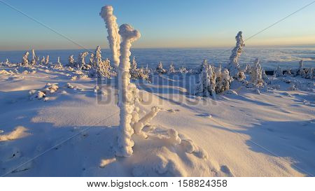 Winter trees in mountains covered with fresh snow and the rising sun.