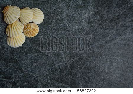 shells and starfish on a stone cold background