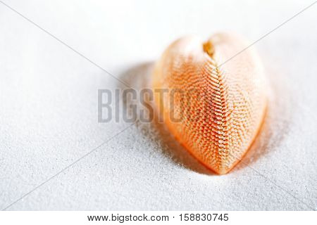 red heart sea shell in beach white sand, shallow dof