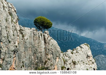 Lonely Pine Tree growing from rocks Spain