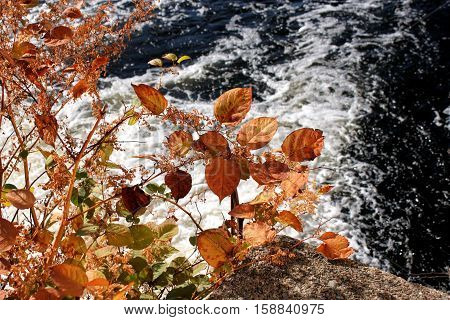 Vegetation on the edge of a fast flowing river showing their autumn colors.