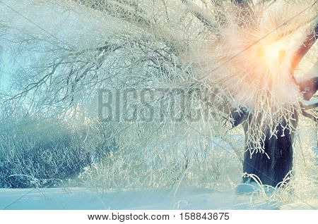 Winter landscape with frosty winter tree in the sunrise beams. Winter wonderland picturesque scene in early winter morning with winter soft sunshine- winter forest in the sunrise. Winter landscape