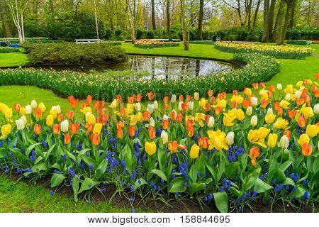 Lane with tulips in formal garden Keukenhof, Netherlands