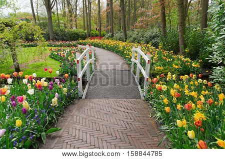 Stone walk way winding in spring formal flower garden Keukenhof, Holland