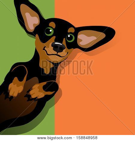 vector illustration of a happy playful black and tan Dachshund on his back. Space for text. For posters, cards, banners, t-shirts