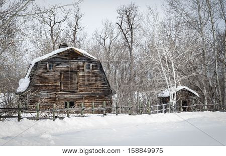 horizontal image of an old brown wood barn sitting behind a wood post fence with pure white snow covering the forefront with trees in the background in the winter time.
