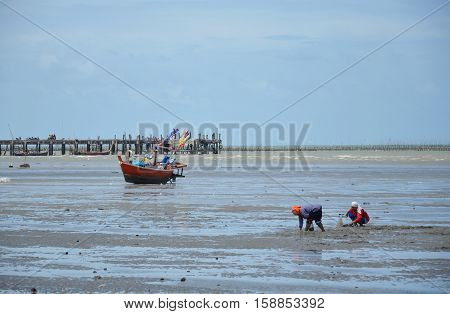 Chonburi Thailand July 25, 2014 : fishery women find some shellfish or crab hiding in sand on the beach