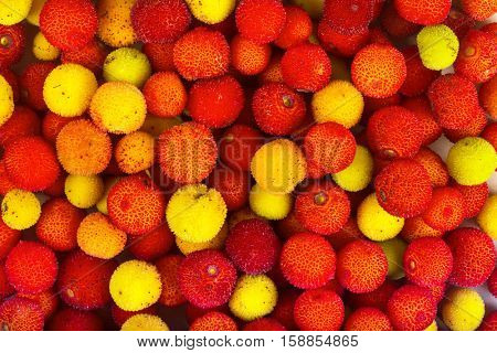 Yellow and red fruits of Arbutus unedo.
