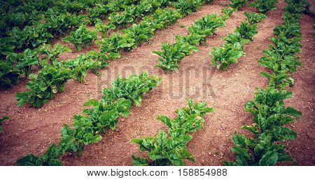 Green vegetation on field