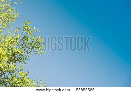 Beautiful green leaves against sky background.(used filter effect)