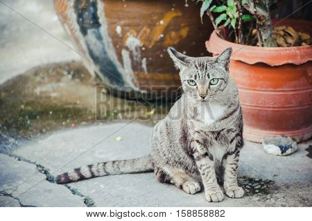 Beautiful White and Grey cat on the street