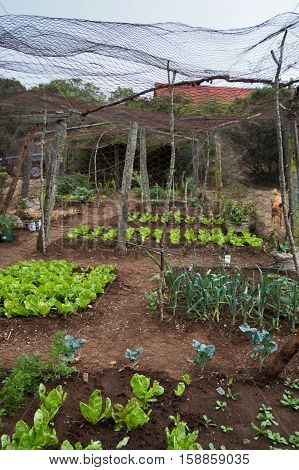 The vegetable garden with lettuce and onions wrapped in chicken wire fencing in Sub-Saharan Africa.