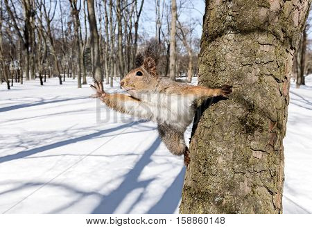 Funny Curious Squirrel Sitting On Tree Trunk