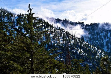 Pine Forest on mountain ridges with snow surrounded by fog and clouds taken in Mt Baldy, CA