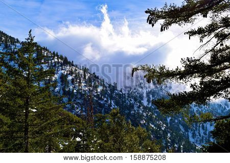 Pine Forest on snow mountain ridges with snow surrounded by fog and clouds taken in Mt Baldy, CA