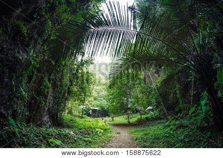 Path in a green tropical forest
