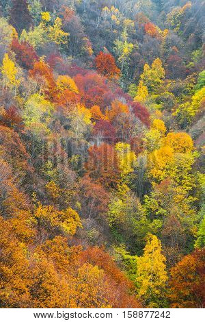 Aerial view of a colorful deciduous forest in autumn with multicolored yellow orange and green foliage on the trees in a scenic full frame view of the changing seasons