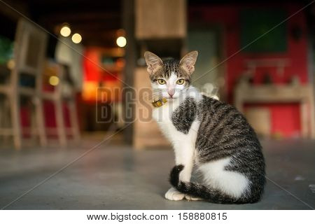 Young domestic cat sitting on the floor in a private house
