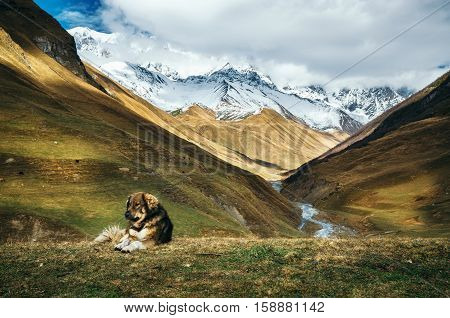 Caucasian Shepherd dog sit on the top of a hill against Enguri river gorge and Shkhara mountain. Greater Caucasus Mountains Range on the background. Seen from Ushguli Upper Svaneti Georgia