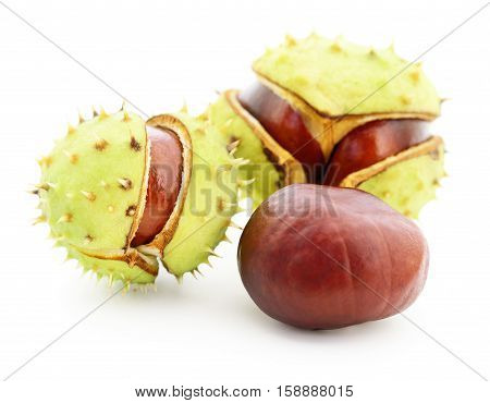Chestnuts in husk isolated on white background.