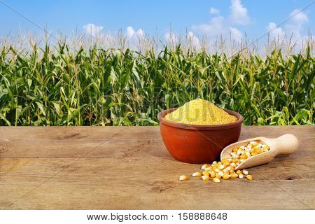 Dry uncooked corn groats in bowl on wooden table with corn field on background. Agriculture and harvest concept. Maize grains with maize field background