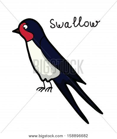 Cartoon swallow,cute illustration picture for your design